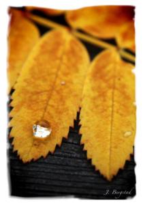 autumn_leaf_white_frame_Johan_Bergstad